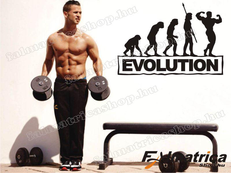 10. Evolúció falmatrica